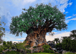Animal Kingdom's Hidden Treasure